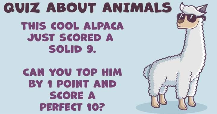 Quiz about Animals